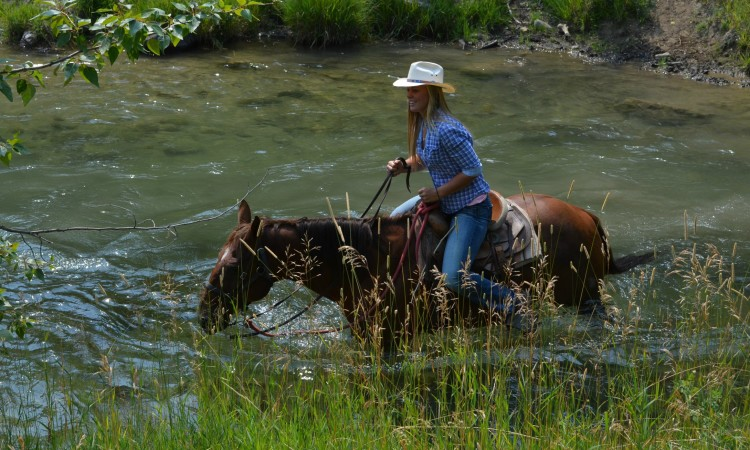Red Lodge MT horseback rides  101