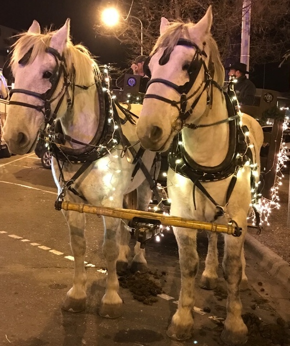 Elk River Outfitters Sleigh Rides Billings MT Zoo Lights